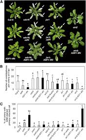 Viral Disease In Plants Page 489 Nuclear Function Of Subclass I Actin Depolymerizing Factor