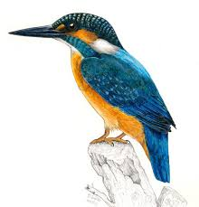 these bird sketches will make your heart soar animal salvation