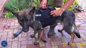 multifunctional dog vest multifunktionale hundeweste