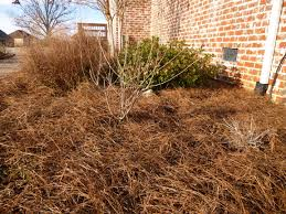 Best Type Of Mulch For Vegetable Garden - garden of aaron six reasons why pine straw makes the best mulch