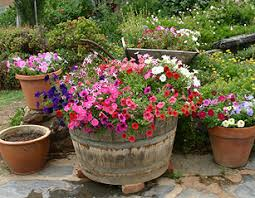 outside flower pot arrangements outdoor flowers containers