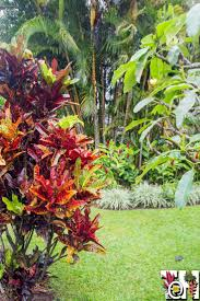 701 best tropical garden images on pinterest tropical plants