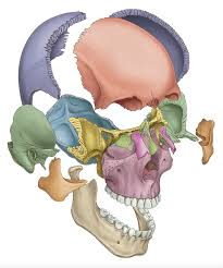 Online Course For Anatomy And Physiology Just Another Anatomy And Physiology Site Anatomy And Physiology