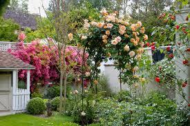 Build A Rose Trellis Rose Trellis Houzz