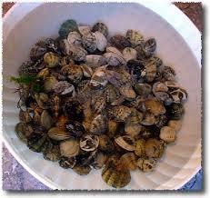 comment cuisiner les palourdes préparer des palourdes vivantes ou des moules et une sauce pour