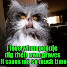 Crazy Cat Memes - grumpy cat may be grumpy but evil cat is downright homicidal imgflip