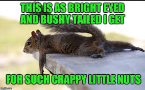 Squirrel Nuts Meme - body shaming squirrel imgflip
