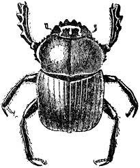 volkswagen bug clip art beetles clipart free download clip art free clip art on