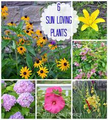 75 best flowers images on pinterest flower gardening garden