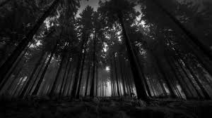 download free black and white forest wallpaper pixelstalk net