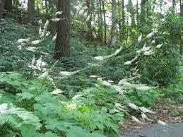 native woodland plants nilsen landscape design exploring native plants at garden in the