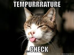 Check In Meme - how cats check for temperature in the morning meme guy