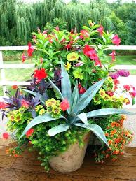 Dish Garden Ideas Cactus Container Garden Hydraz Club