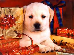 christmas dog wallpapers crazy frankenstein
