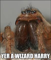 Hobo Memes - movie quote hobo spider memes quickmeme