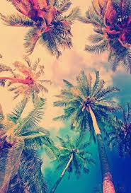 zedge wallpapers for laptop 39 palm tree wallpaper hd palm tree wallpapers and photos view