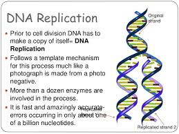 dna structure and replication amazinglife