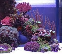 Live Rock Aquascaping Ideas 30 Best Zee Aquarium Images On Pinterest Saltwater Aquarium