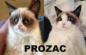 Grumpy Cat No Meme - grumpy cat still grumpy