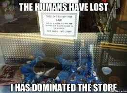 Meme Store - store cat memes viral viral videos