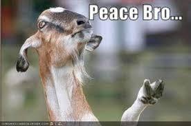 Peace Memes - funny goat memes peace bro w630
