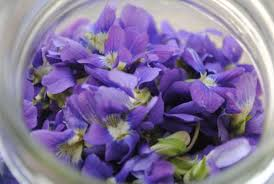 edible blue flowers edible flower cuisine and gorgeous food presentation