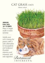 amazon com cat grass oats seeds 15 grams botanical