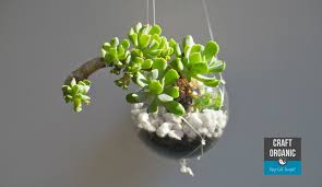 succulents suspended in recycled light bulbs craft organic