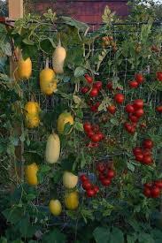 small kitchen garden ideas best 25 vegetable garden design ideas on raised bed