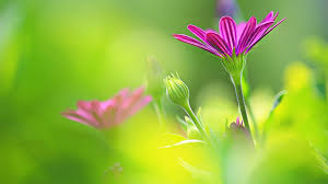 flowers images hd on wallpaperget com