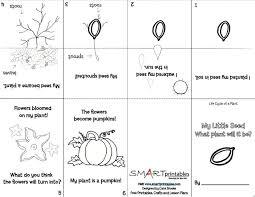 29 best fall science pumpkins apples leaves images on pinterest