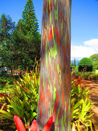 dole plantation u2013oahu hi u2013 kmb travel blog