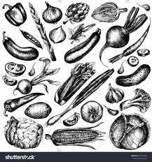 hand drawn ink sketch vegetable set stock illustration 581584786