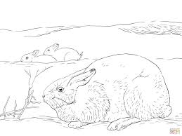 how to draw a arctic hare pencil art drawing