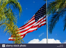 Florida Flag History Large American Flag Flies Over The Palm Trees In Florida On A Blue