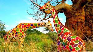 Colorful Pictures Pink Giraffe Desktop Wallpaper Wallpapersafari