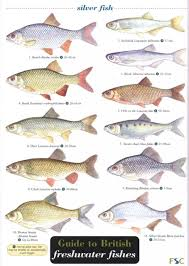 Freshwater Fish Guide To British Freshwater Fishes Paul Croft And Carol Roberts