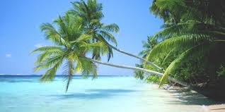 why palm trees aren t to the caribbean kiskeya