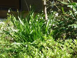 viking mat駻iel de bureau poppo s 春が満開 夏花の準備開始