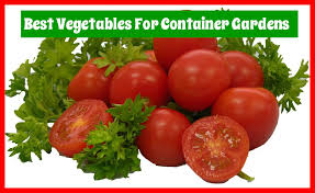Vegetables For Container Gardening by 10 Vegetables For Container Gardening Mother2motherblog