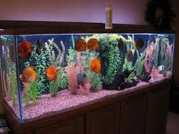 Decorations Discus Fish Tank Fish Tank Decor Ideas Aquarium