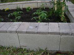 building a cinder block raised garden yard garden plants