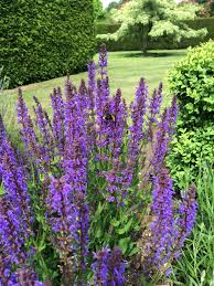 ten traditional perennials for summer long colour u2013 igrowhort