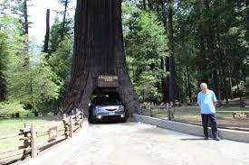 Chandelier Drive Through Tree Chandelier Drive Through Tree Picture Of Chandelier Drive