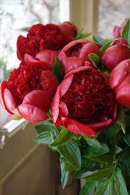Peony Floral Arrangement Best 25 Red Peonies Ideas On Pinterest Peony Colors Peonies