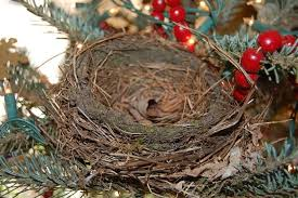 nest in the christmas tree forest society
