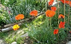 chic best garden fertilizer for vegetables of the worlds best