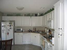 plants for on top of kitchen cabinets great question decorating the space above your kitchen