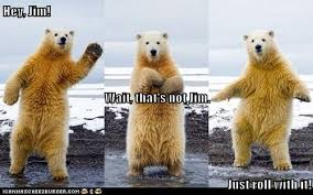 Stay Cool Meme - polar bears know how to stay cool animal capshunz funny animals