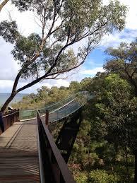 Kings Park Botanic Garden by Perth Kings Park U0026 Botanical Garden During Fall Lollapalooza In